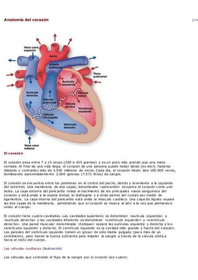Aparato circulatorio 3