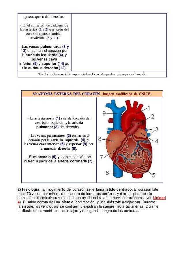 Aparato circulatorio sanguíneo