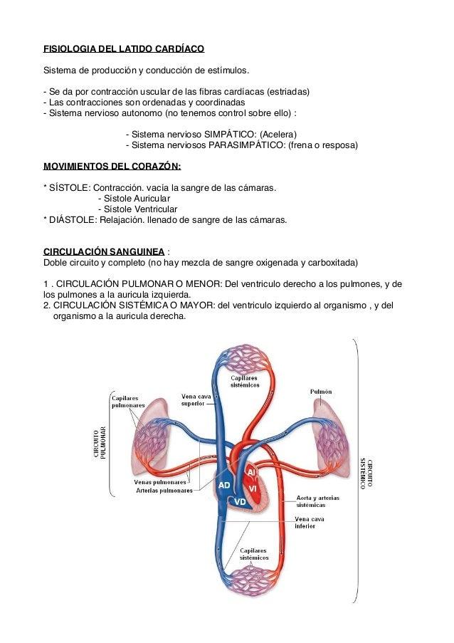 Introducción al Aparato circulatorio (sistema cardiovascular) Veterin…