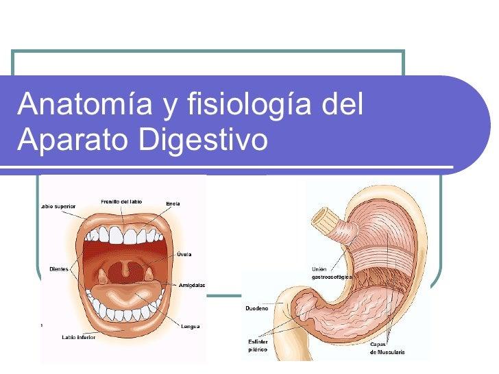 Aparato digestivo enfermería