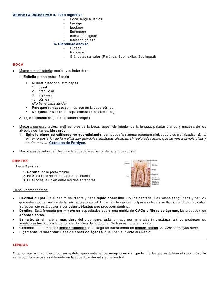 APARATO DIGESTIVO: a. Tubo digestivo<br />Boca, lengua, labios<br />Faringe<br />Esófago<br />Estómago<br />Intestino delg...
