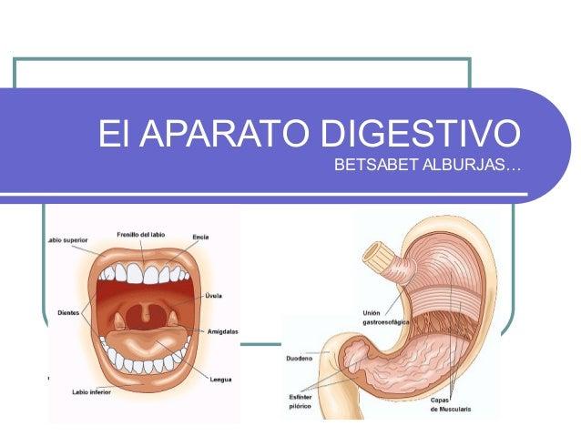 El APARATO DIGESTIVO BETSABET ALBURJAS…
