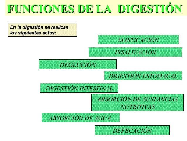 25 FUNCIONES DE LA DIGESTIÓNFUNCIONES DE LA DIGESTIÓN MASTICACIÓN INSALIVACIÓN DEGLUCIÓN DIGESTIÓN ESTOMACAL DIGESTIÓN INT...