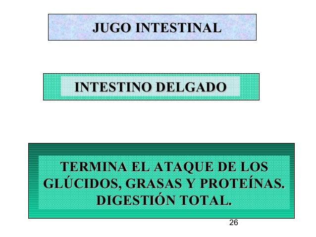26 JUGO INTESTINALJUGO INTESTINAL TERMINA EL ATAQUE DE LOSTERMINA EL ATAQUE DE LOS GLÚCIDOS, GRASAS Y PROTEÍNAS.GLÚCIDOS, ...