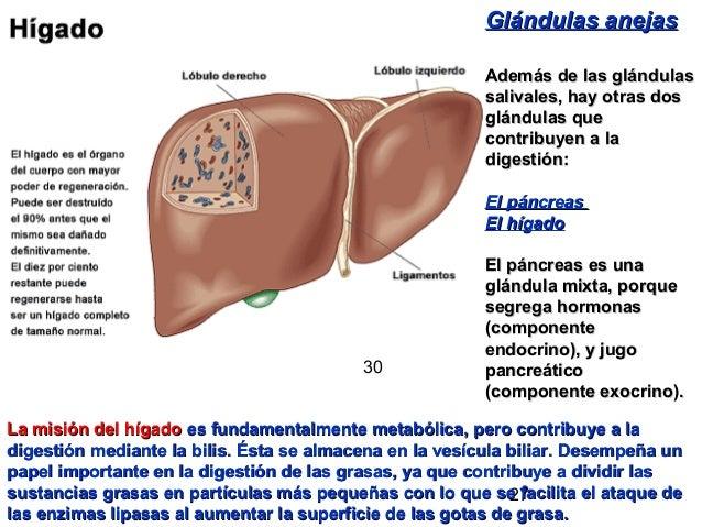 27 Glándulas anejasGlándulas anejas Además de las glándulasAdemás de las glándulas salivales, hay otras dossalivales, hay ...