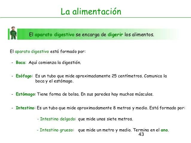 43 La alimentación El aparato digestivo se encarga de digerir los alimentos. El aparato digestivo está formado por: - Boca...
