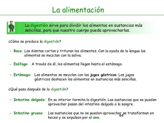 44 La digestión sirve para dividir los alimentos en sustancias más sencillas, para que nuestro cuerpo pueda aprovecharlas....