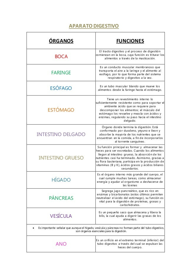 Sistema de organos y sus funciones