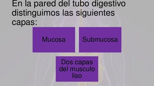 Aparato digestivo Slide 3