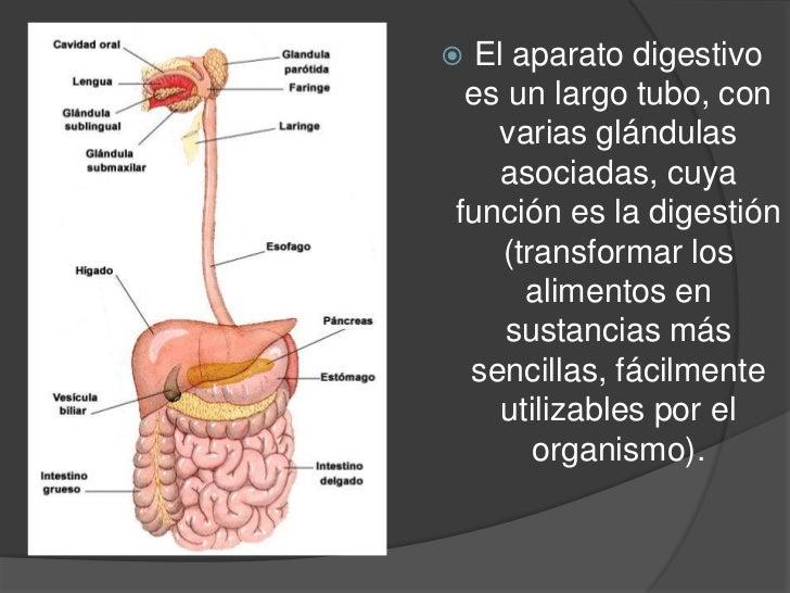 Aparato digestivo organos y funciones