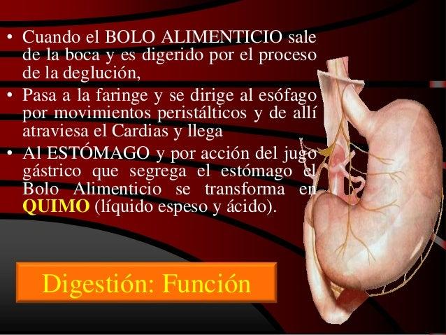 Aparato digestivo 5