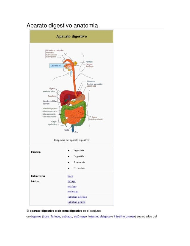 Aparato digestivo anatomiaAparato digestivoDiagrama del aparato digestivoFunciónIngestiónDigestiónAbsorciónExcreciónEstruc...