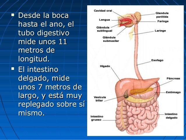 Aparato digestivo fisiologia