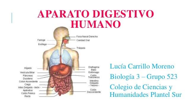 aparato-digestivo-humano-1-638.jpg?cb=1476585816