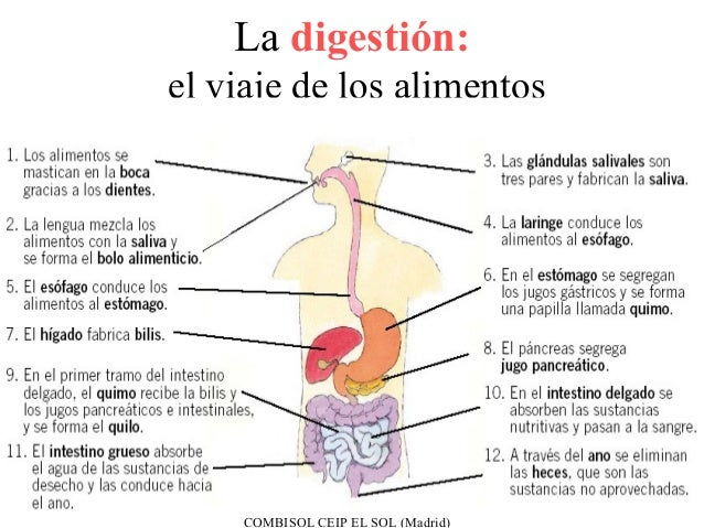 La digestión:el viaje de los alimentos     COMBISOL CEIP EL SOL (Madrid)