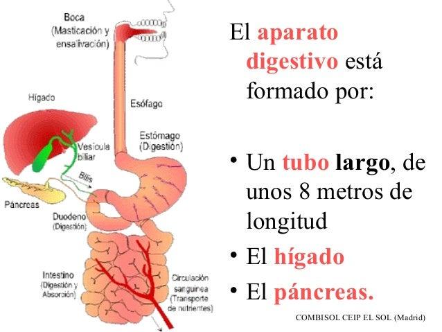 Aparato digestivo y función de nutrición