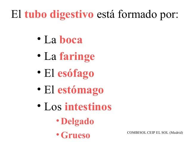 El tubo digestivo está formado por:     • La boca     • La faringe     • El esófago     • El estómago     • Los intestinos...