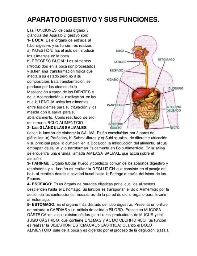 Aparato Digestivo Y Sus Funciones
