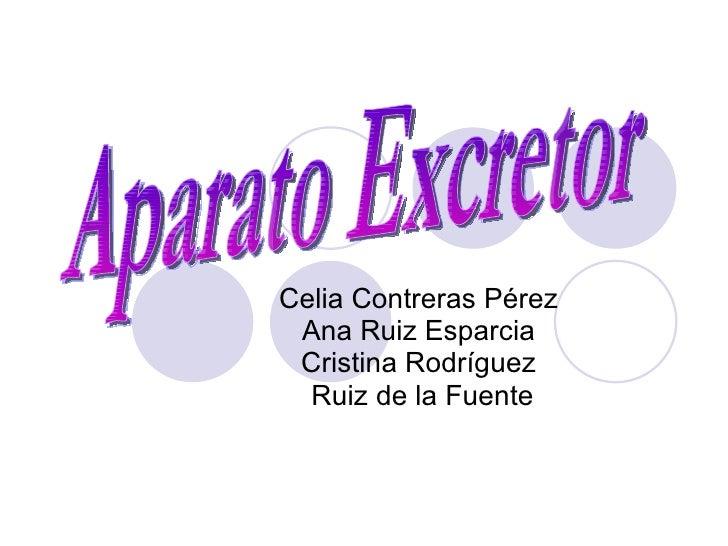 Celia Contreras Pérez Ana Ruiz Esparcia Cristina Rodríguez Ruiz de la Fuente Aparato Excretor