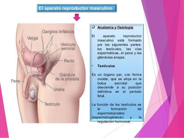 Aparato genital masculino y femenino