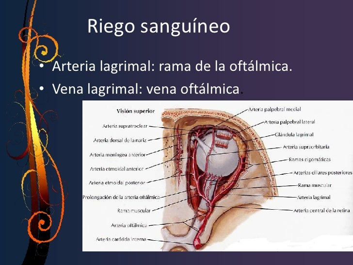 fisiologíaSecuencia del drenaje de la lagrima:La lagrima fluye por los bordes libres  palpebrales y entra a los canalícul...