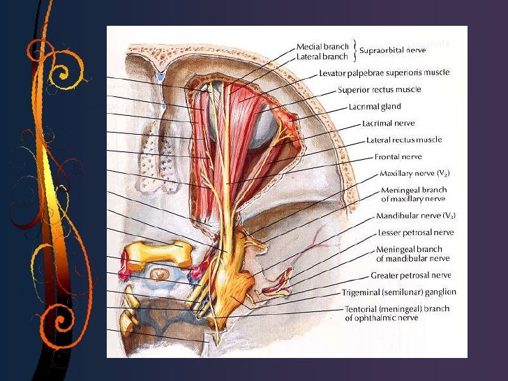 Exploración con sonda de irrigación • Anestesia tópica en saco conjuntival. • Insertar cánula lagrimal recta unida a una  ...