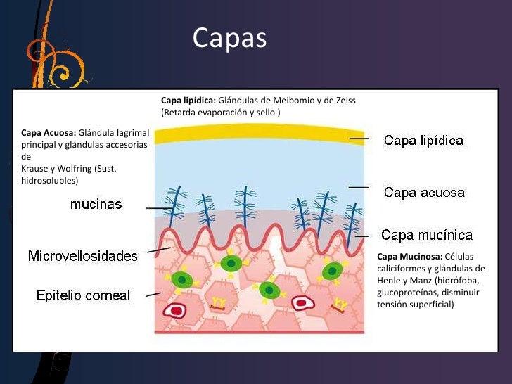 • Otros agentes:  – Ciclosporina tópica (0.05 al 0.1 %): Reduce    inflamación mediadas por células del tejido    lagrimal...