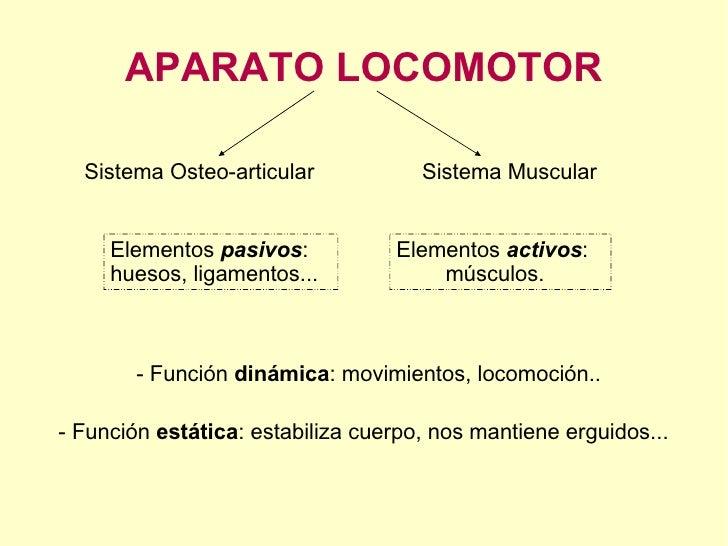 APARATO LOCOMOTOR Sistema Osteo-articular Sistema Muscular - Función  dinámica : movimientos, locomoción.. - Función  está...