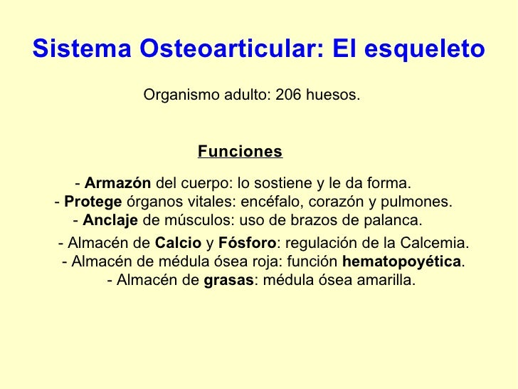 Sistema Osteoarticular: El esqueleto Organismo adulto: 206 huesos. Funciones -  Armazón  del cuerpo: lo sostiene y le da f...