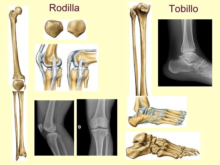 Rodilla Tobillo