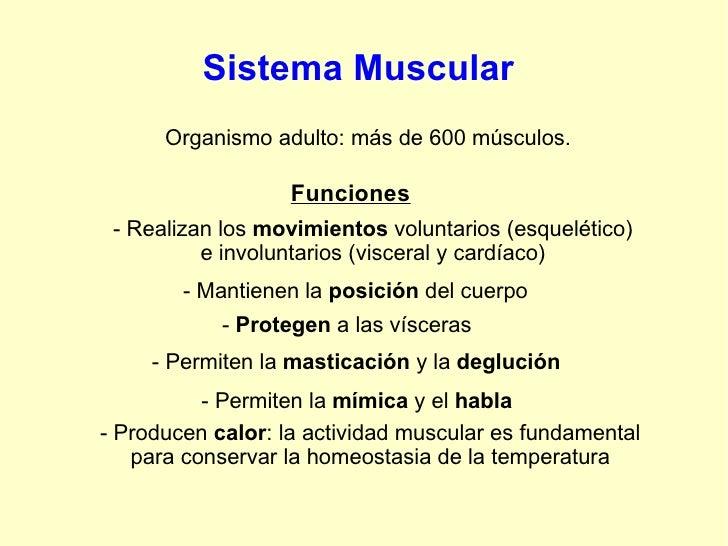 Sistema Muscular Organismo adulto: más de 600 músculos. Funciones - Realizan los  movimientos  voluntarios (esquelético) e...