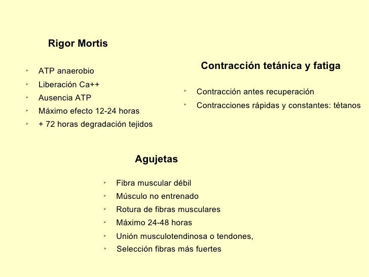 Rigor Mortis <ul><li>ATP anaerobio </li></ul><ul><li>Liberación Ca++ </li></ul><ul><li>Máximo efecto 12-24 horas </li></ul...