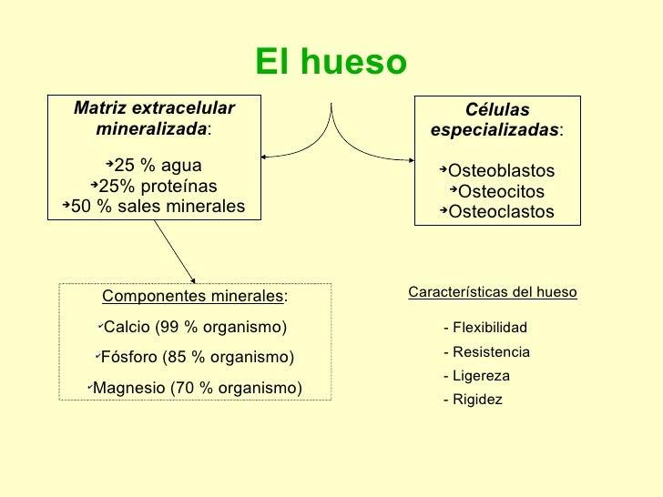 El hueso <ul><li>Matriz extracelular mineralizada : </li></ul><ul><li>25 % agua </li></ul><ul><li>25% proteínas </li></ul>...