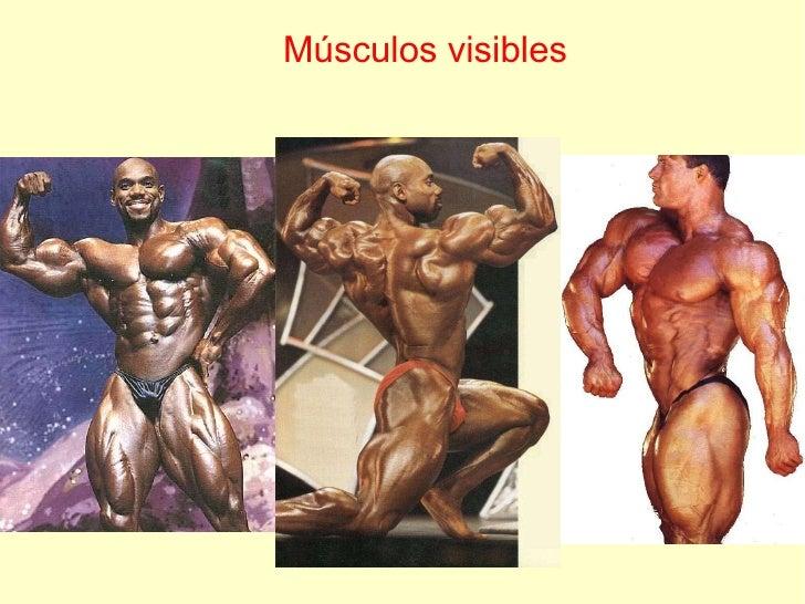 Músculos visibles