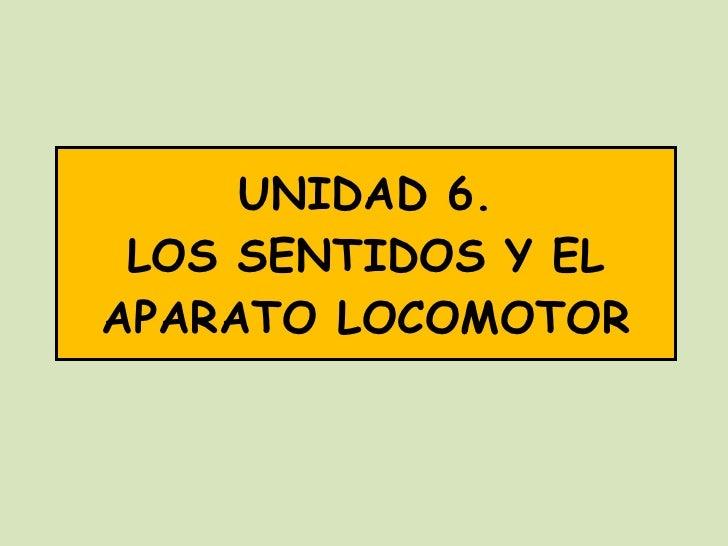 UNIDAD 6. LOS SENTIDOS Y EL APARATO LOCOMOTOR