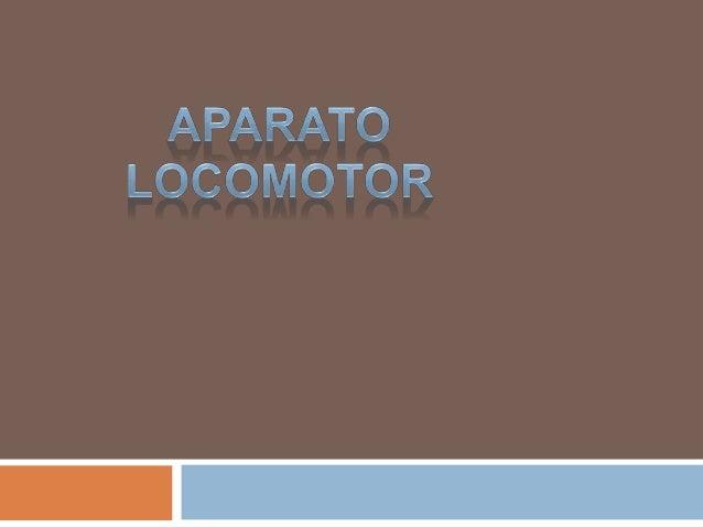 • ¿Qué es ? El aparato locomotor es el formado por huesos y articulaciones. •¿Cuáles son las funciones del aparato locomot...