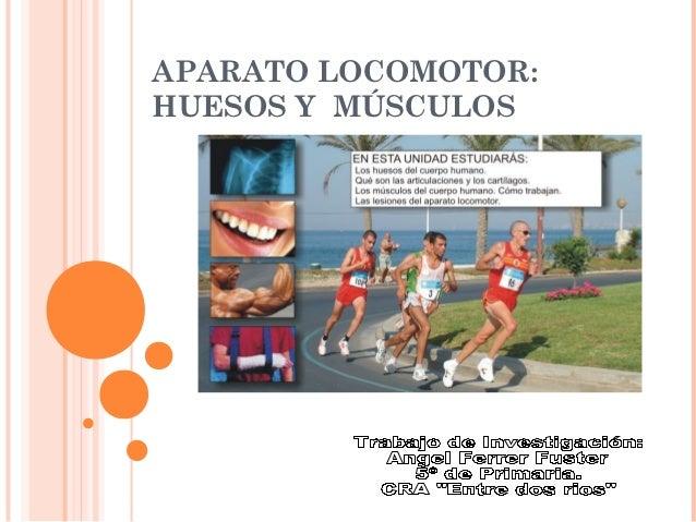 APARATO LOCOMOTOR:HUESOS Y MÚSCULOS