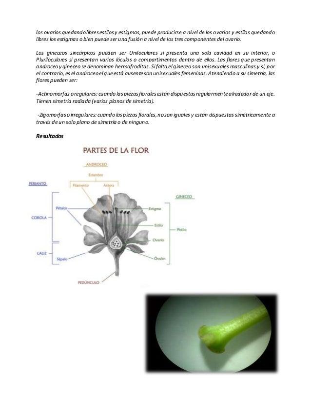 Aparato Reproductor de una flor angiosperma