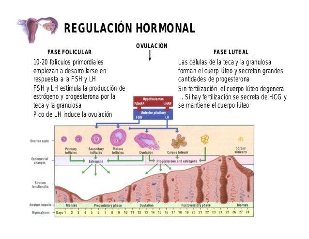 Histología de aparato reproductor femenino