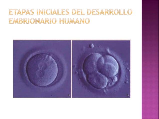 Los genitales externos reciben el nombre de vulva y tienen un revestimiento de epitelio estratificado plano: 1. Monte de v...