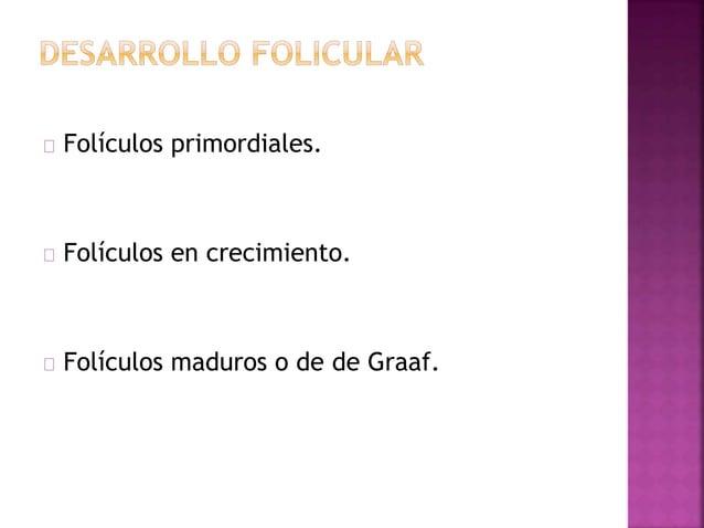 Las células foliculares sufren estratificación para formar la capa granulosa del folículo primario. Proliferación mitótica...