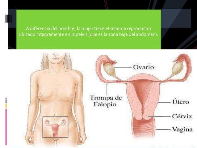 Aparato reproductor femenino Slide 2