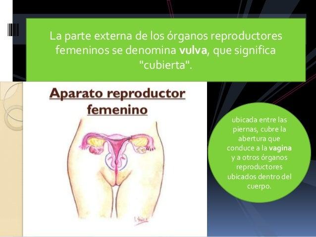 Aparato reproductor femenino Slide 3