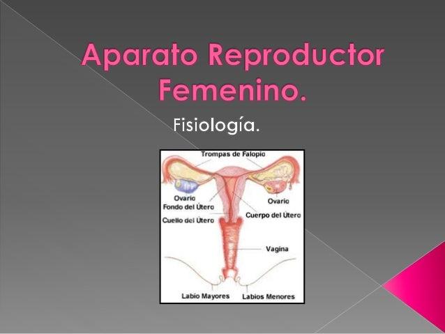  Hormonas sexuales Femeninas. a. Definición. b. Estrógenos. c. Progesterona.