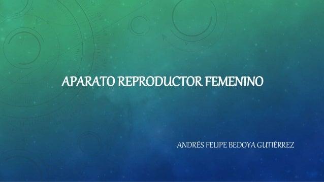 APARATO REPRODUCTOR FEMENINO ANDRÉS FELIPE BEDOYA GUTIÉRREZ