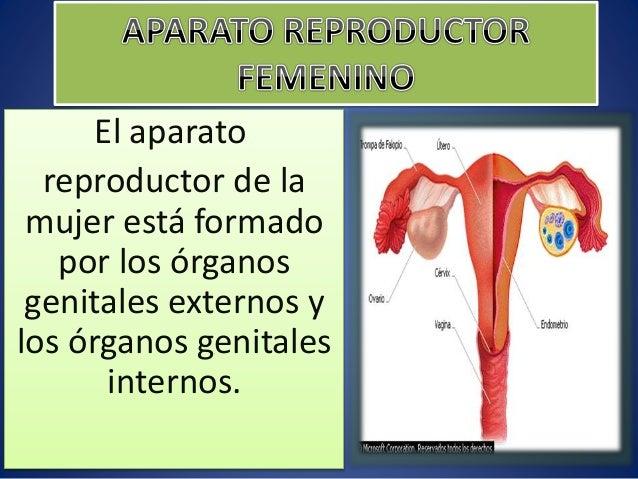 Aparato reproductor femenino,masculino