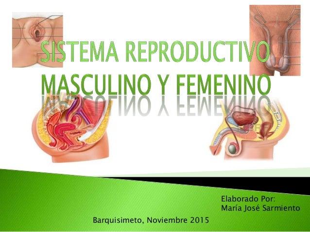 Barquisimeto, Noviembre 2015 Elaborado Por: María José Sarmiento