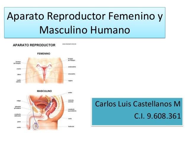 aparato reproductor femenino y masculino humano
