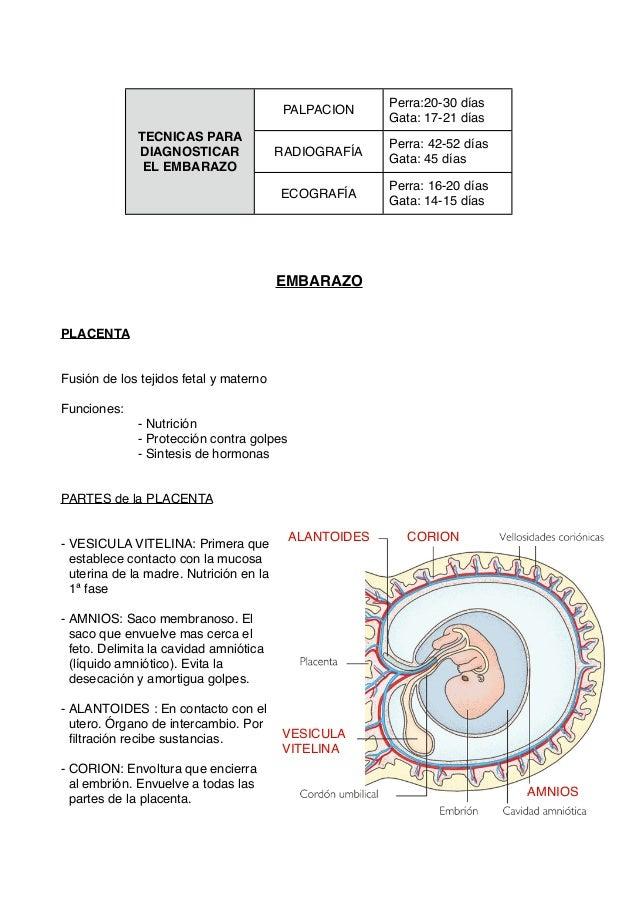 Aparato reproductor hembras ( Veterinaria)