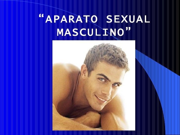 """"""" APARATO SEXUAL MASCULINO"""""""